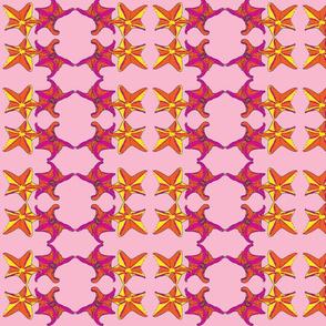 Starfish dance CitrusPk