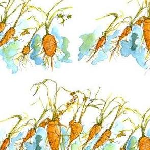 Winter Carrots