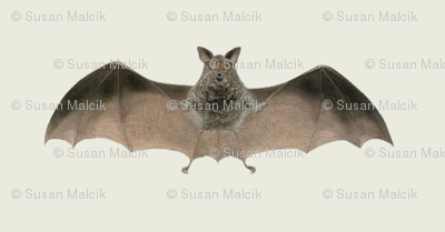 Batty One