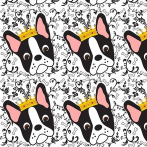 Tiny Queen Daisy the Boston Terrier
