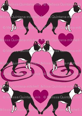 Tiny Little Kissing Boston Terriers