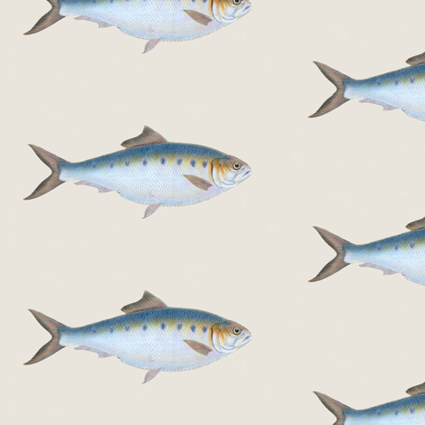 Go Go Fish 2 fabric by susaninparis on Spoonflower - custom fabric
