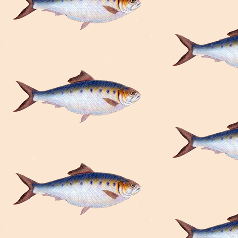 Go Go Fish fabric by susaninparis on Spoonflower - custom fabric