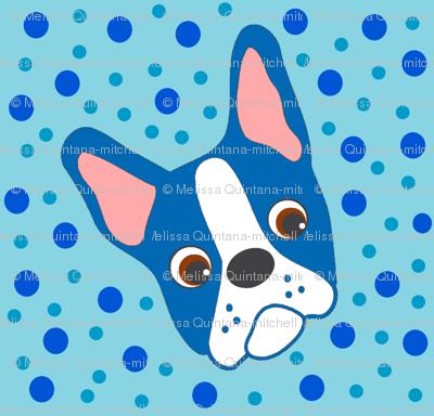 Puppy Primo the Blue Boston Terrier