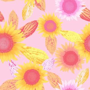 sunflower, pink
