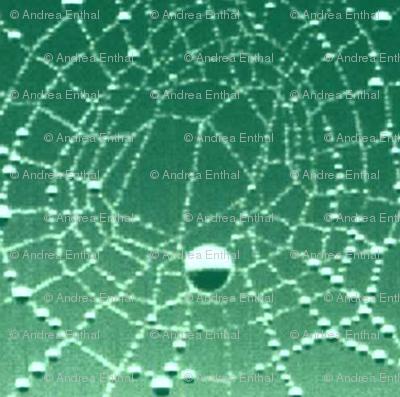Cobwebs in the rain