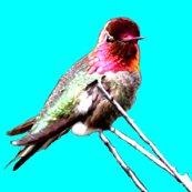 Rrrrmale_anna_s_hummingbird_ed_ed_ed_ed_shop_thumb