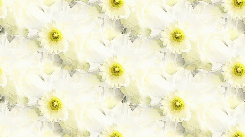 Rwitte_narcis_fq-1_shop_preview