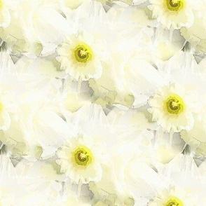 Honeydew daffodil