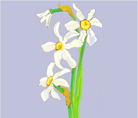 Rrrrrrfat_quarter_narcissus2bcd_shop_preview