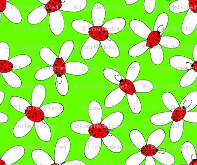 LaraGeorgine_Ladybug_dasies