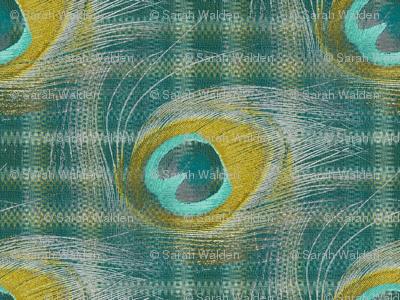 Peacocked-eyed