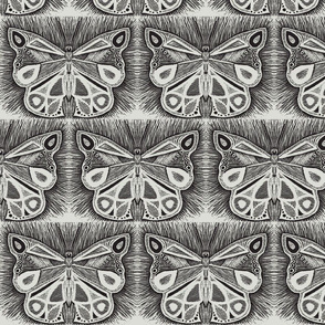 full_butterfly_mirrored-ed-ch