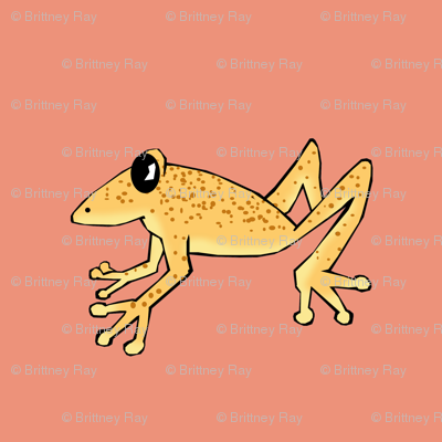 Uluguru Banana Frog