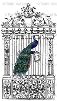 peacockgate