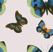 Butterfly_pattern_2