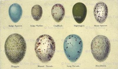 Rranimal-bird-eggs-2_preview