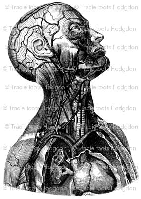 anatomy_head