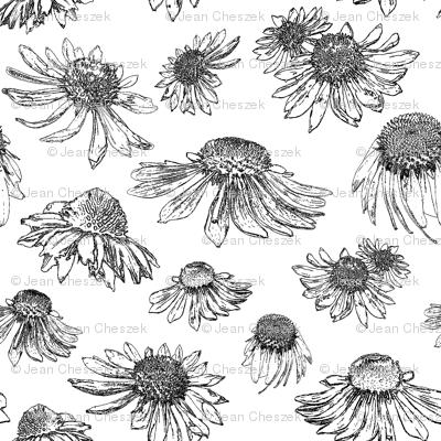 Coneflowers-Black and White