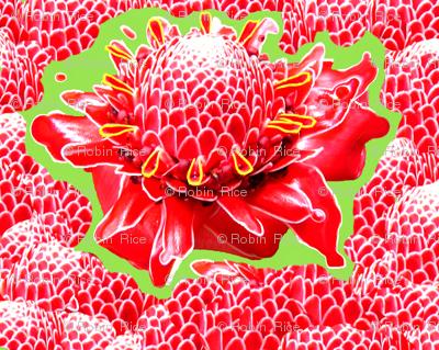 Happy Protea