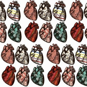 Anatomical Hearts