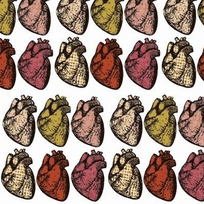 Anatomical Hearts Subdued