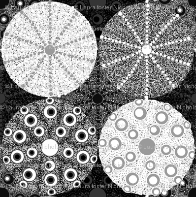 black & white Sea Urchins