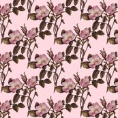 Rrrrnew_charlotte_rose_on_pink_shop_thumb