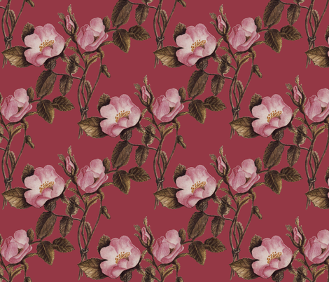 Charlotte Bronte's Wild Roses on Fuchsia  fabric by peacoquettedesigns on Spoonflower - custom fabric