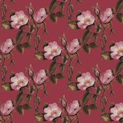 Rrrroses_on_fuschia_shop_thumb