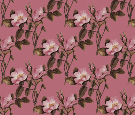 Charlotte Bronte's Wild Roses on Rose fabric by peacoquettedesigns on Spoonflower - custom fabric