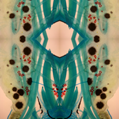 Sea urchin Vertical