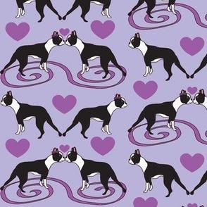 Kissing Bostons in lavender