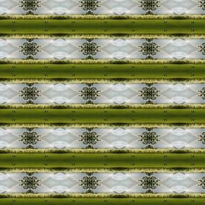 FF_Rainbow Bald Stripe