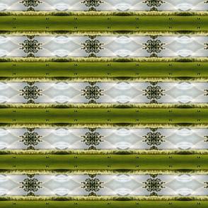 FF_Rainbow Stripe