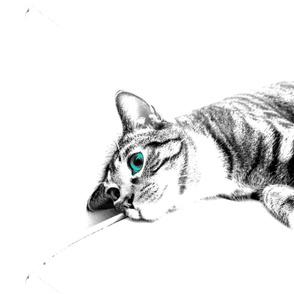 Teal Eyed Kitty