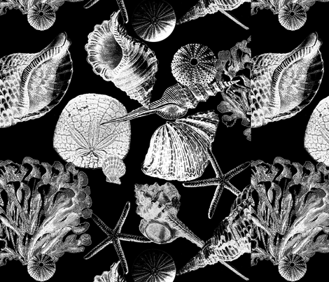 Antique Sea Shells - B&W fabric by eclectic_mermaid on Spoonflower - custom fabric