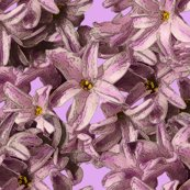 Rrhyacinth_flowers_mini_shop_thumb