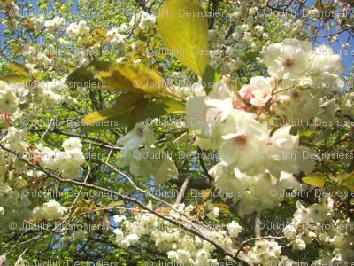 Cream Tree
