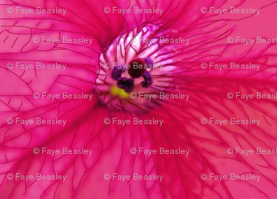 Pink Flower With Vains