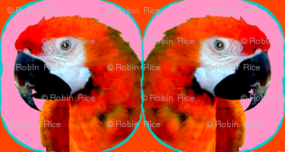 Polly and Polly