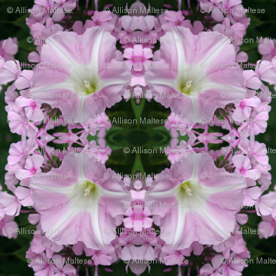 Pink Petunias-3153