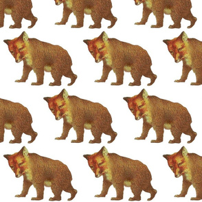 weary_foxbear