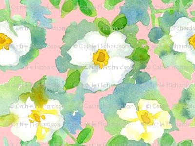 Cameo Cherokee Rose