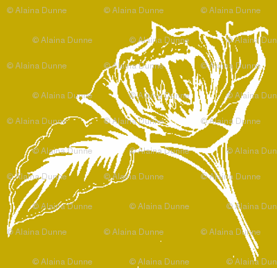 Mustard Roses-ch-ch