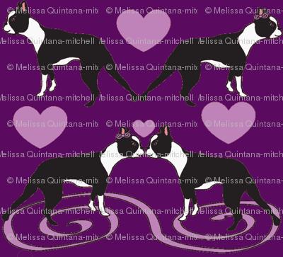 Kissing Bostons in Purple