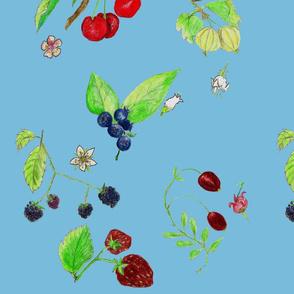 berries on blue