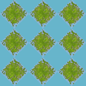 Lattice leaves