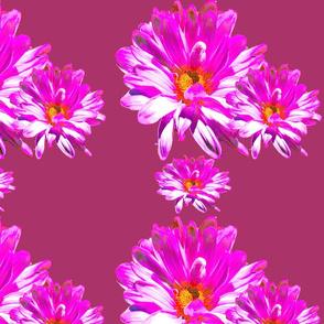 Pink_Burgundy_copy