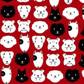 chiens en lignes fond rouge